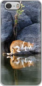Capa Cat Reflection in Pond Water