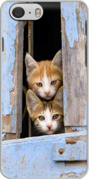 Capa Cute curious kittens in an old window