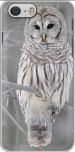 Capa owl bird on a branch for Iphone 6 4.7